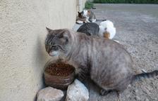 Torredembarra signa un conveni amb l'Associació Torrecat per gestionar les colònies de gats