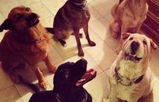 Jardiland regala bosses per recollir els excrement de gos a Cunit