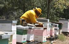 La mel del Perelló arriba fins a Taiwan
