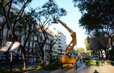 Poden els arbres de la Rambla Nova per evitar que les branques caiguin a terra