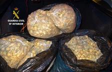 Confiscats 25 quilos de la planta base de l'opi, l'heroïna i la morfina a l'Ametlla de Mar