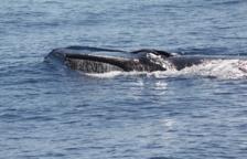 Els primers albiraments de balenes a la costa catalana aquest 2018 s'han produït a Cambrils
