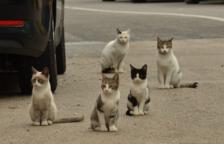 Tarragona se declara Ciudad Amiga de los Gatos