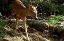 La pel·lícula Salvatge - Alt Francolí descobreix la natura i els animals de la zona