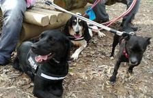 Una protectora de Calafell inicia una campaña de donaciones para salvar a 11 perros