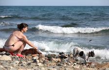 Només cinc municipis de Tarragona tenen platges per a gossos