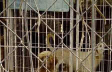 Els animals de la gossera il·legal de Calafell es traslladaran a un espai en condicions