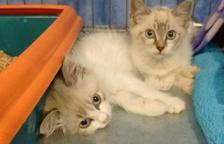 Sesión de adopciones de gatos en las Gavarres