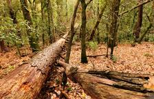 El bosc de Poblet, un dels més ben conservats gràcies a la diversitat d'escarabats