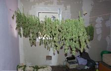 Desmantellen una plantació de marihuana a l'interior d'una casa d'eines de Riudoms