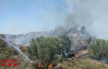 Controlen un incendi de matolls a Ascó