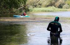 Pesca prohibida fins la tardor per frenar el nou focus de caragol maçana a l'Ebre