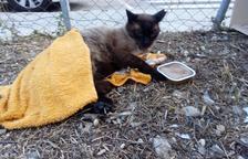 Veïns del Vendrell reclamen que el consistori reculli animals del carrer
