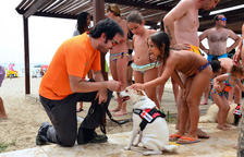 La unitat canina ERIE de Creu Roja farà un simulacre a la platja Llarga de Roda
