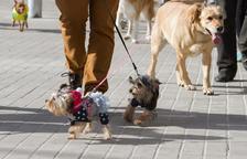 L'Ajuntament no té clar si les proves d'ADN dels gossos aniran a càrrec dels particulars