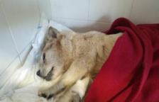 Encuentran una perra viva encerrada en una bolsa que flotaba en la playa Llarga