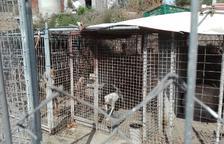 Veïns denuncien que a la gossera il·legal de Calafell encara hi queden animals