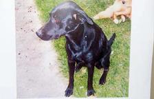 Un ciutadà demana ajuda per recuperar la seva gossa perduda