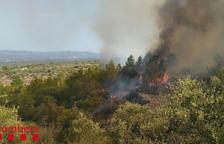 Cinc hectàrees de vegetació cremades per un incendi a Xerta