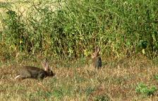 Veïns del Vendrell es queixen per la proximitat d'una zona de caça