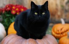 Per què les associacions no donen en adopció gats negres en aquesta època?