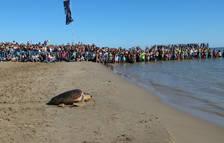 Alliberen al Delta de l'Ebre 14 tortugues babaues recuperades