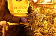 Detenen un jubilat per cultivar marihuana al Pla de Manlleu