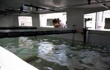 L'IRTA aprofitarà els subproductes de la indústria cervesera per fer pinsos per a l'aqüicultura