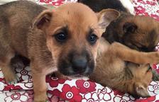 Busquen adoptants per un grup de cadells que van abandonar al carrer a Calafell