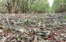 Unió de Pagesos preveu un 50% de pèrdues en la collita d'avellana al Camp de Tarragona