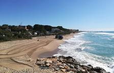 Retiren les velelles de la platja del Francàs del Vendrell