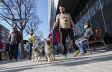La futura ordenança d'animals passa per una consulta pública
