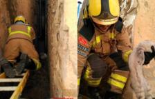 Rescaten un gatet atrapat entre dos edificis a Vallmoll