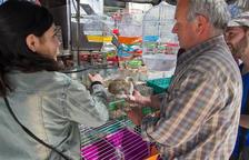 La venda ambulant d'animals estarà prohibida amb la nova ordenança