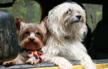 Vols viatjar per Europa amb el teu gos, què et cal?