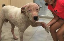 Un final feliç per a Danko, un gos abandonat a Montbrió per una amistat traïda