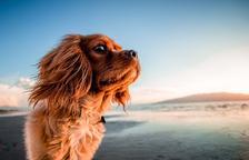 Cinc platges 'Dog Friendly' per refrescar-te amb el teu gos