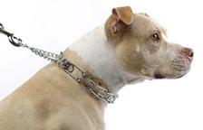 L'ICAT insta a informar als consumidors sobre la prohibició de certs collars canins