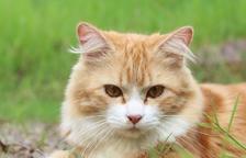 Què tenir en compte si has de viatjar en cotxe amb el teu gat?