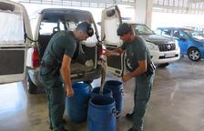 La Guàrdia Civil intervé més 220 quilos de pop per la seva venda 'il·legal' a les Cases d'Alcanar
