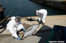 Apareix un dofí llistat mort al Port de Tarragona