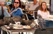 Reus enllesteix la nova ordenança d'animals
