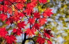 Un fin de semana de otoño descubriendo el entorno de las montañas de Prades