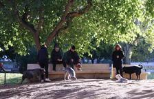 Tarragona reclama als propietaris de gossos la neteja dels orins al carrer