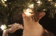 Els 5 perills a evitar aquest Nadal si tens un gat