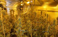 Detenen dues persones per cultivar marihuana en una casa de Castellvell del Camp