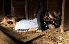 El Refugi Les Set Cabretes recull fons per salvar una euga enverinada
