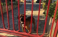 Rescaten el gos atrapat entre dues portes d'una casa a la Bisbal del Penedès