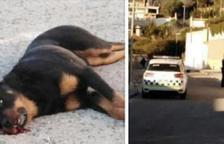 La policía local mata a tiros un perro a la urbanización Valldemar de Segur de Calafell