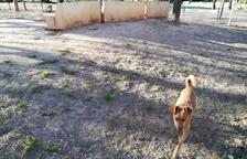 Usuaris del pipicà del Parc de la Quinta demanen més seguretat